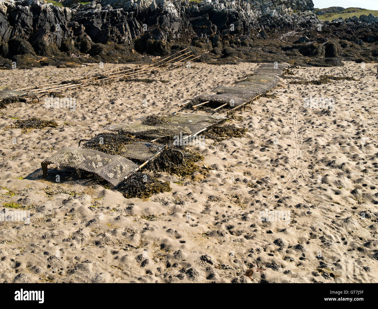 Oyster farm beds, The Strand, Isle of Colonsay, Scotland, UK. Stock Photo