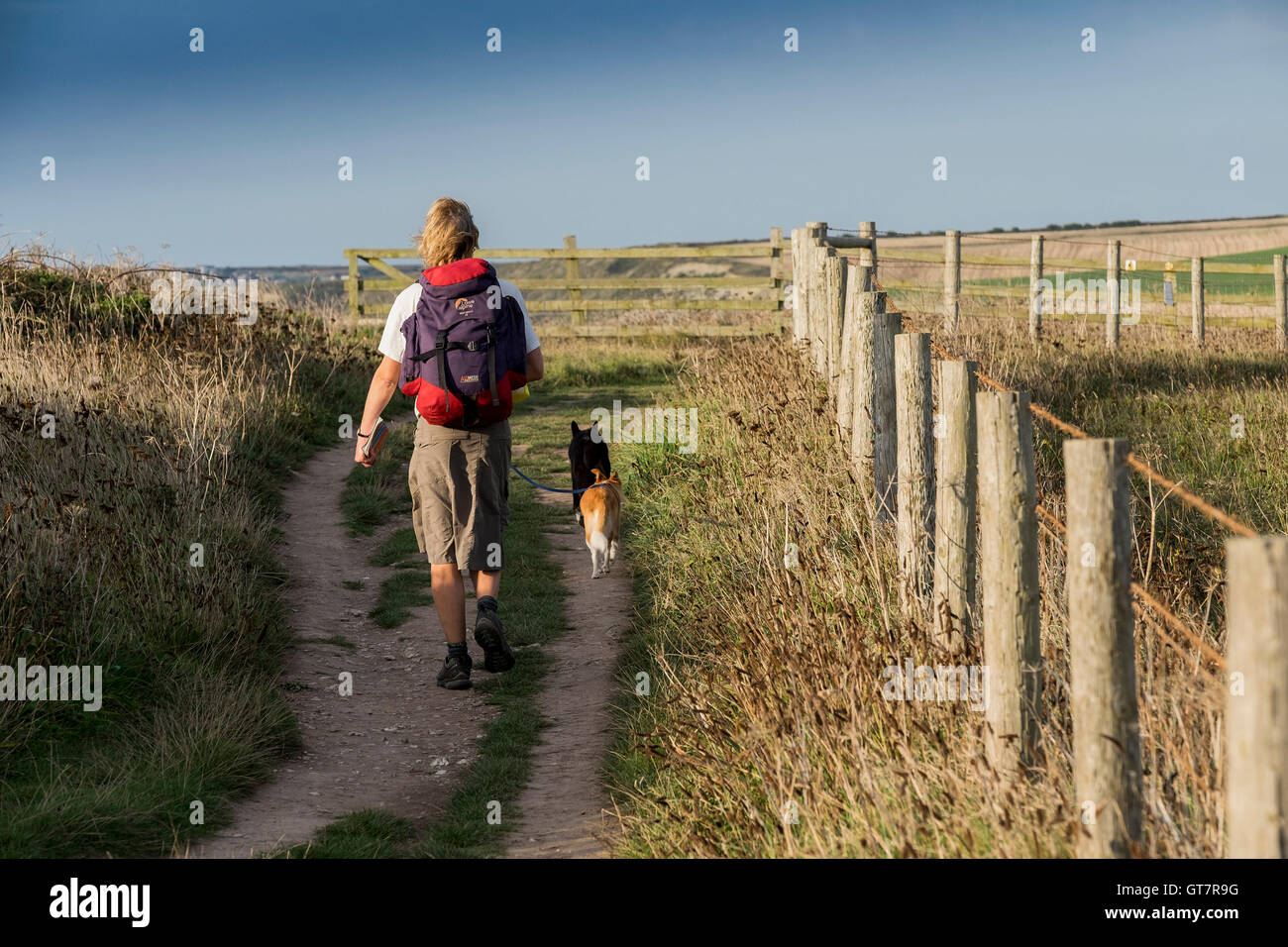 A woman walks her two dogs along the South West Coastal Path from Newquay to watergate Bay in Cornwall. - Stock Image