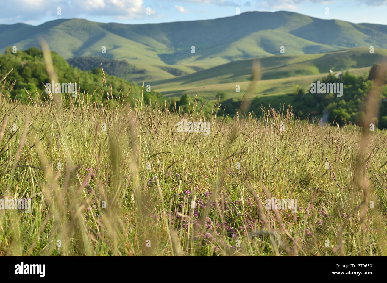 Landscape of Zlatibor Mountain viewed partly through spring grass - Stock Image