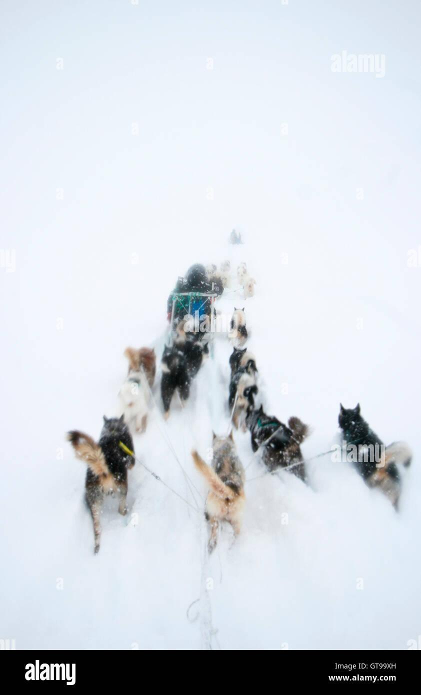 Sled dogs in Kulusuk. Greenland. - Stock Image