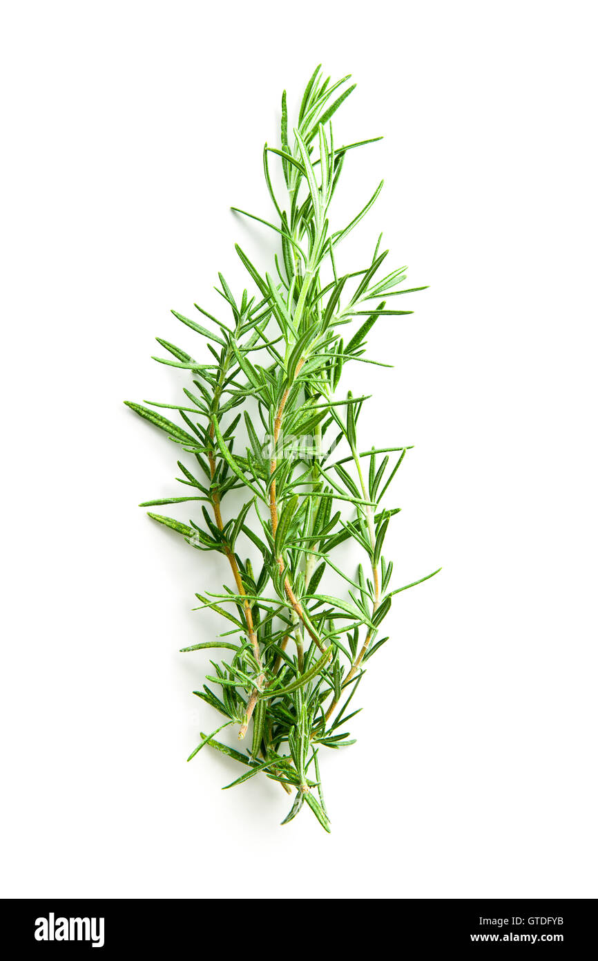 The rosemary branch isolated on white background. - Stock Image