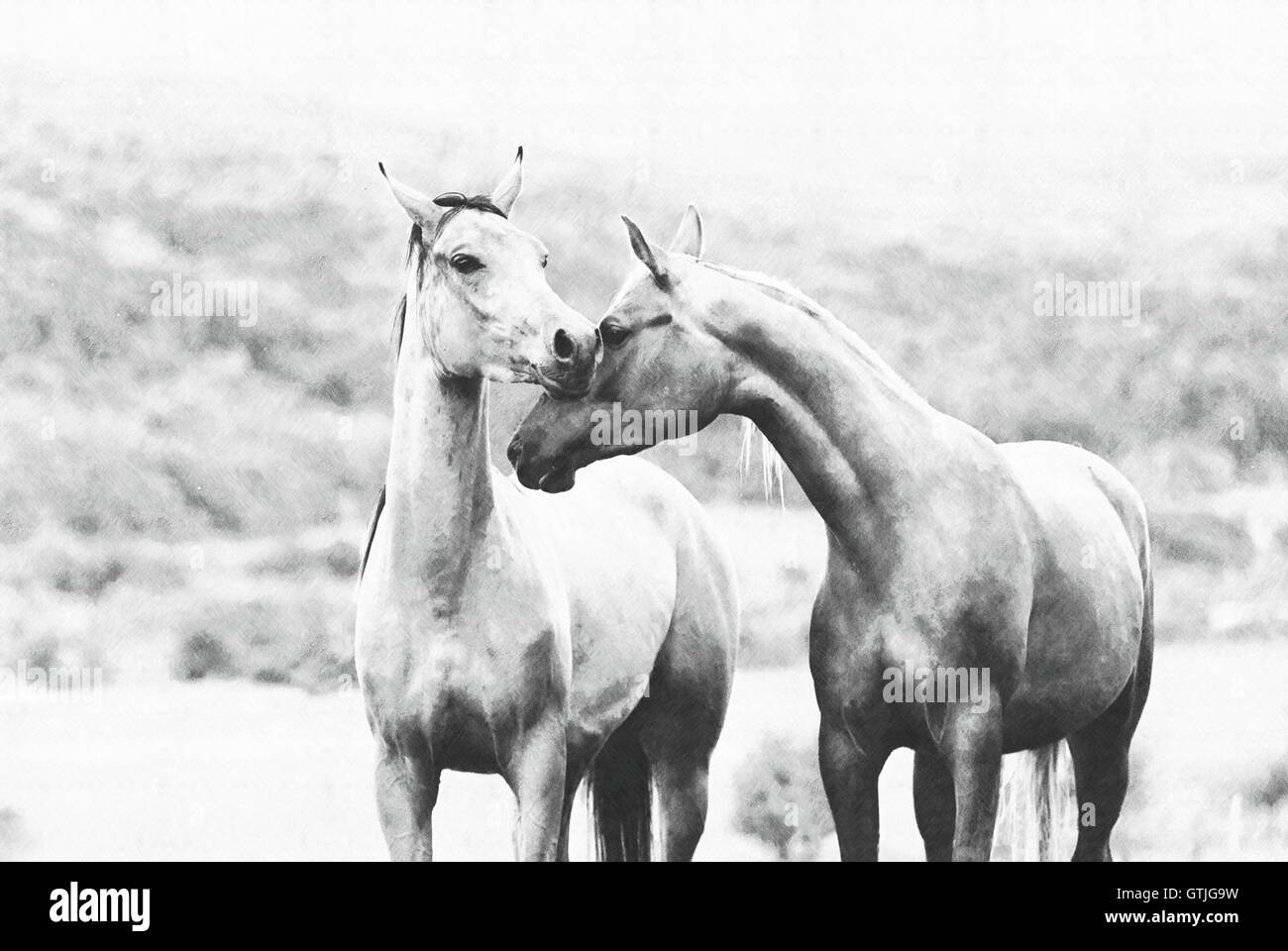 Couple Of Horses On A Meadow Stock Photo Alamy
