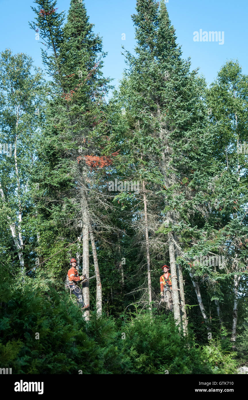 River Lumberjacks Logging