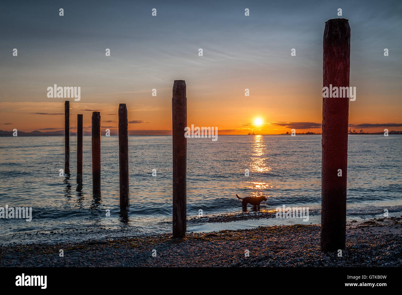dog silhouette at sunset near the old pier of Point Roberts, Washington State, USA - Stock Image