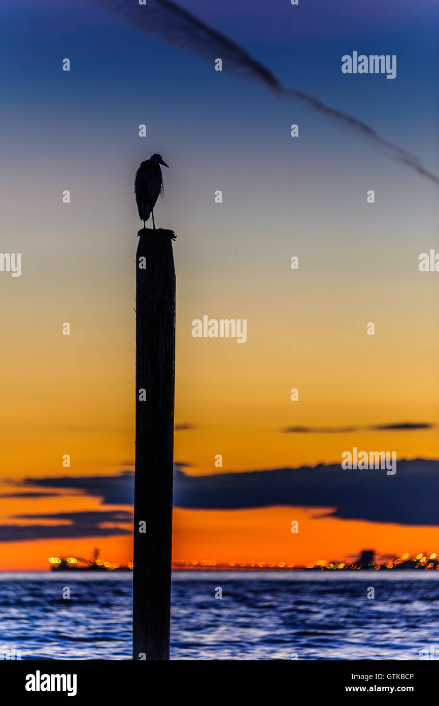 seagull silhouette resting on a post at sunset in Point Roberts, Washington state, USA - night picture - Stock Image