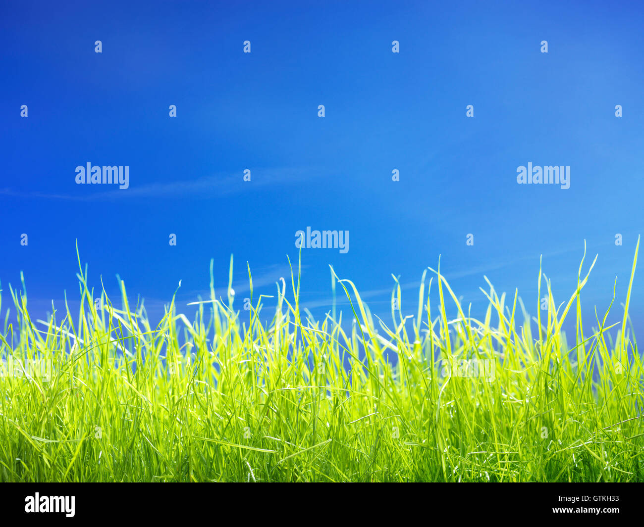 Fresh young green lawn grass under blue sunny sky closeup background Stock Photo