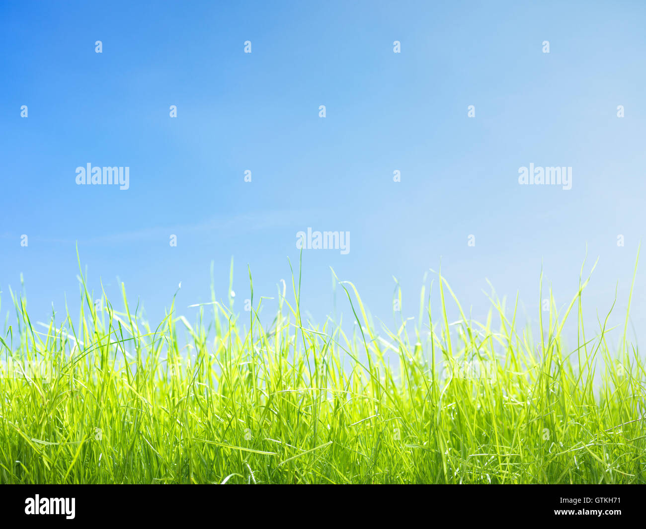 Closeup of young green lawn grass growing under bright blue sunny sky - Stock Image