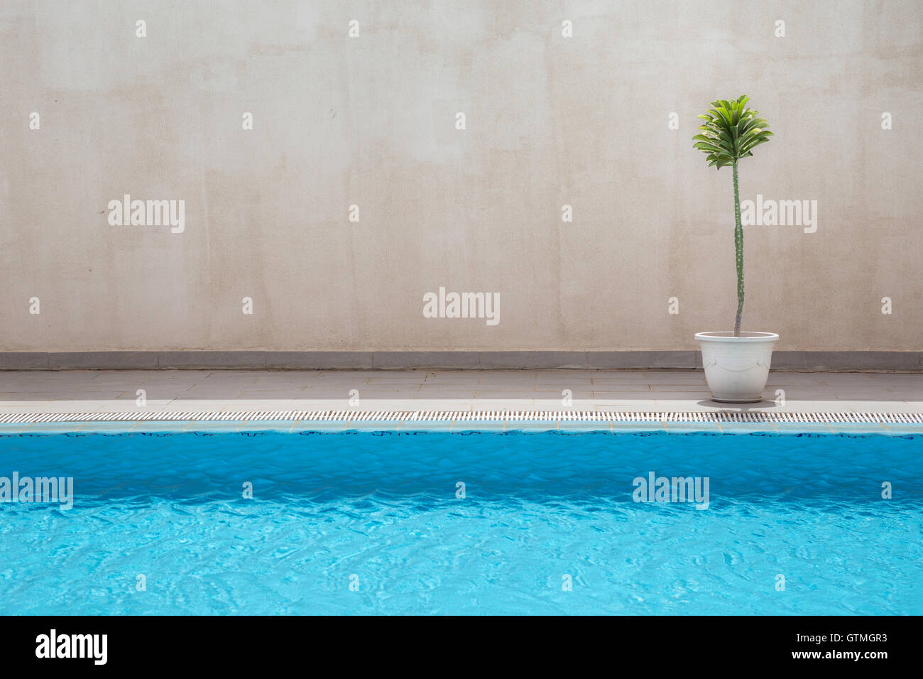 A potted cactus plant by the swimming pool in a hotel in Nouakchott, Mauritania - Stock Image