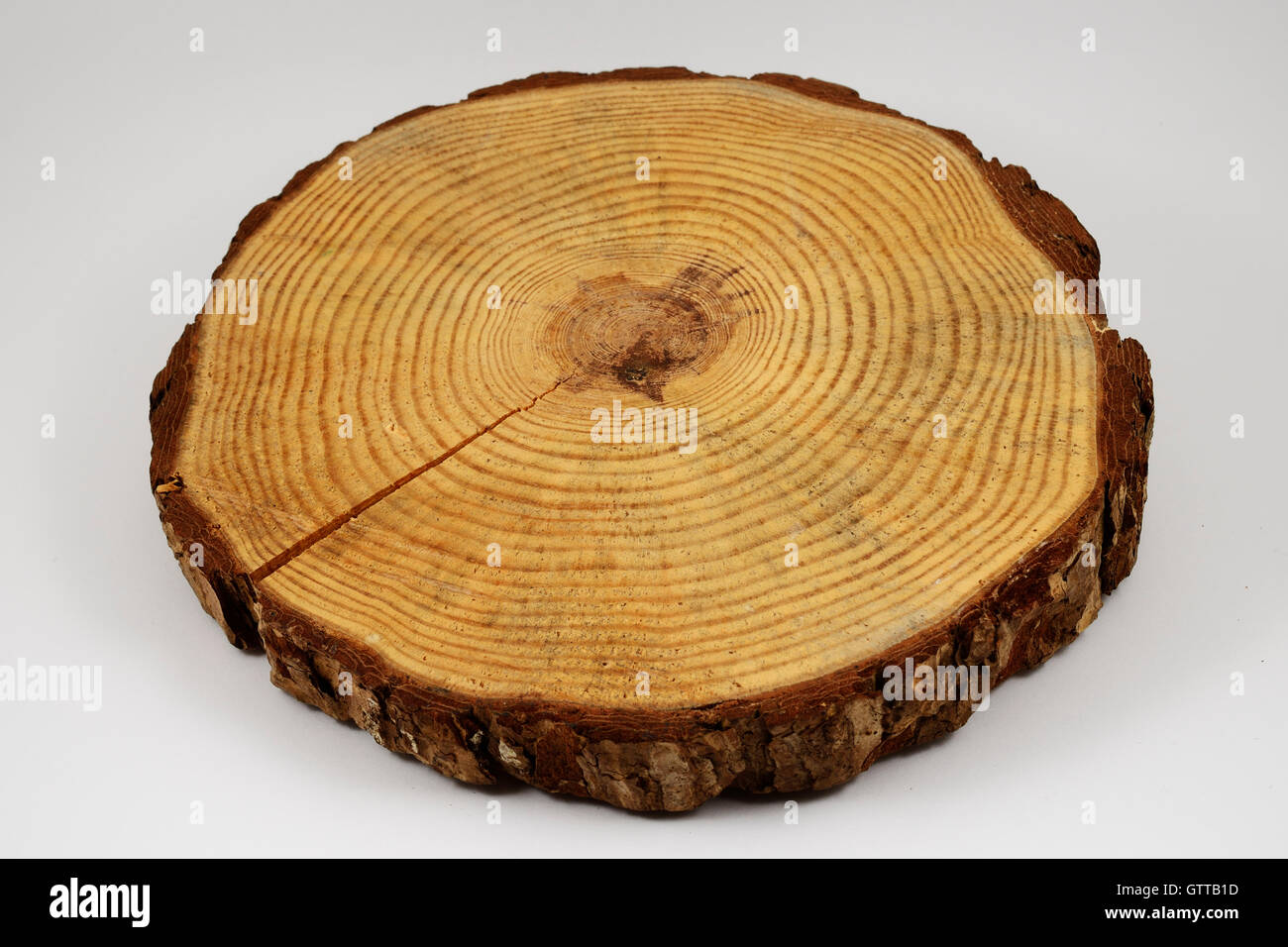 wooden circle with a split cut of the log on white background Stock Photo