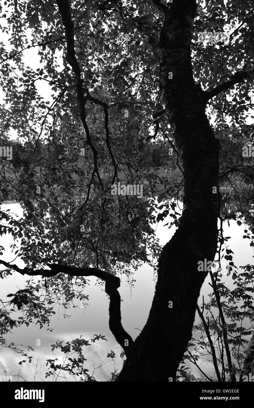 Abstract. Under the birch tree. - Stock Image