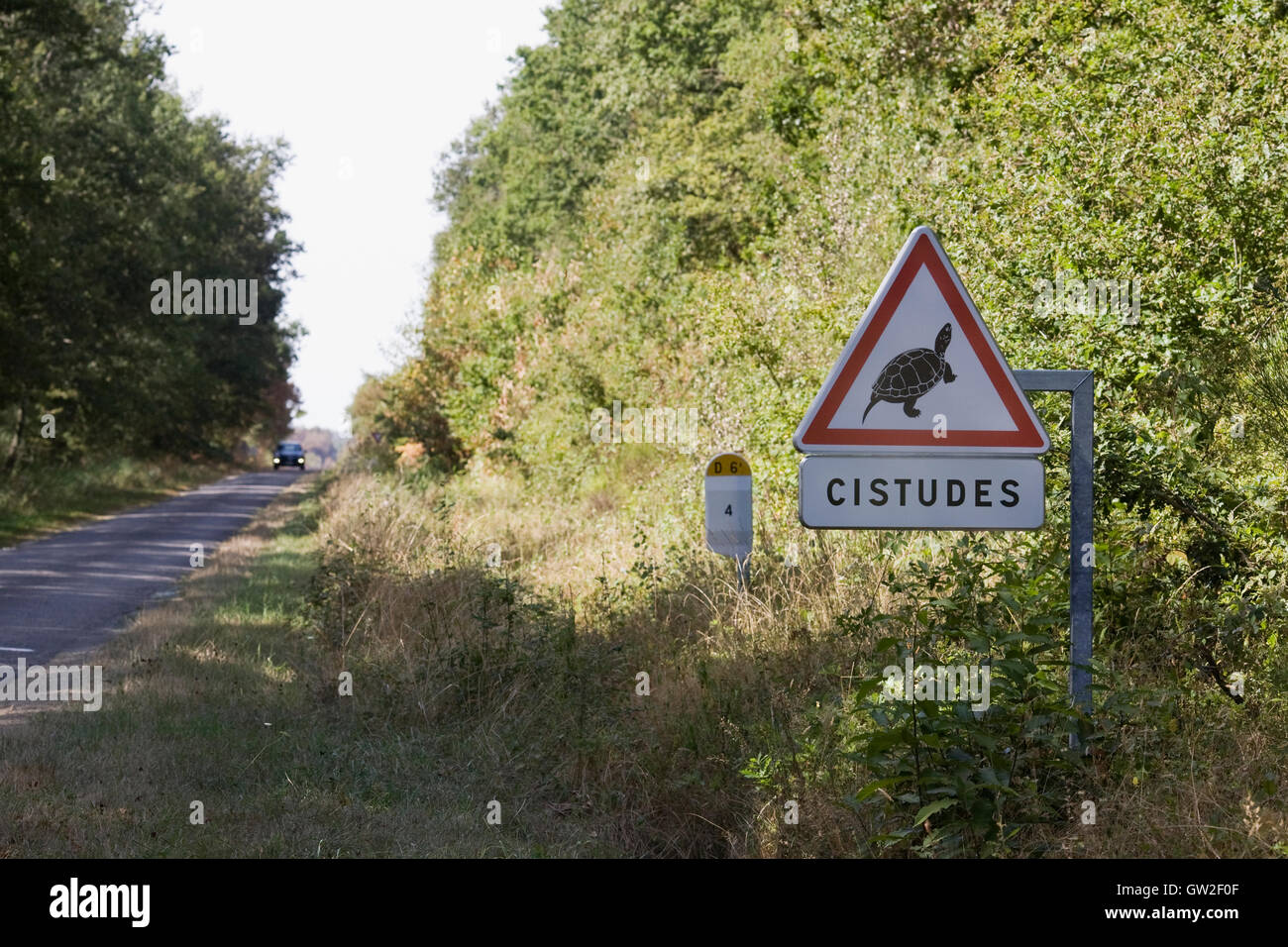 Traffic sign warning that cistudes maybe crossing the road. - Stock Image