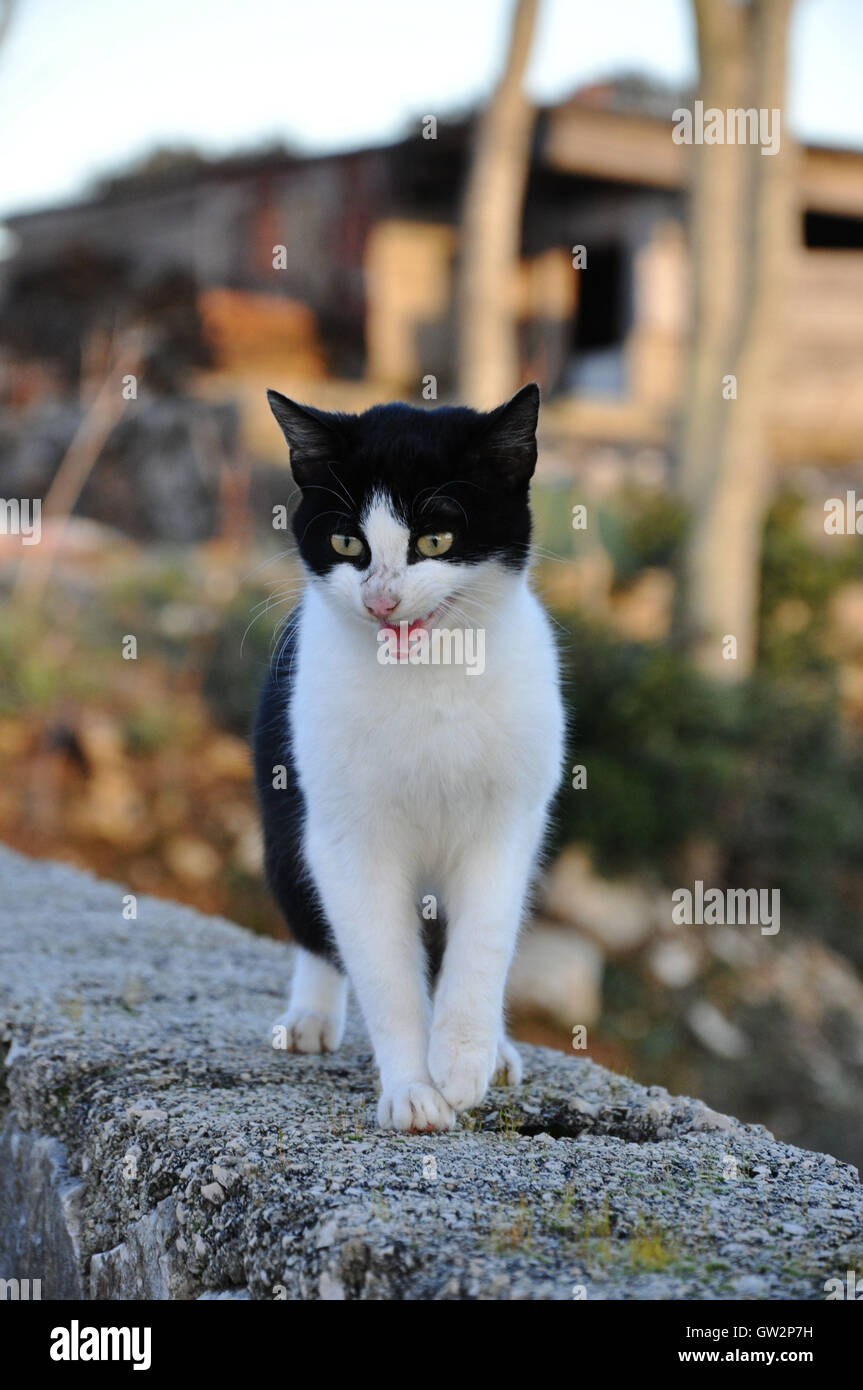 Angry cat - Stock Image