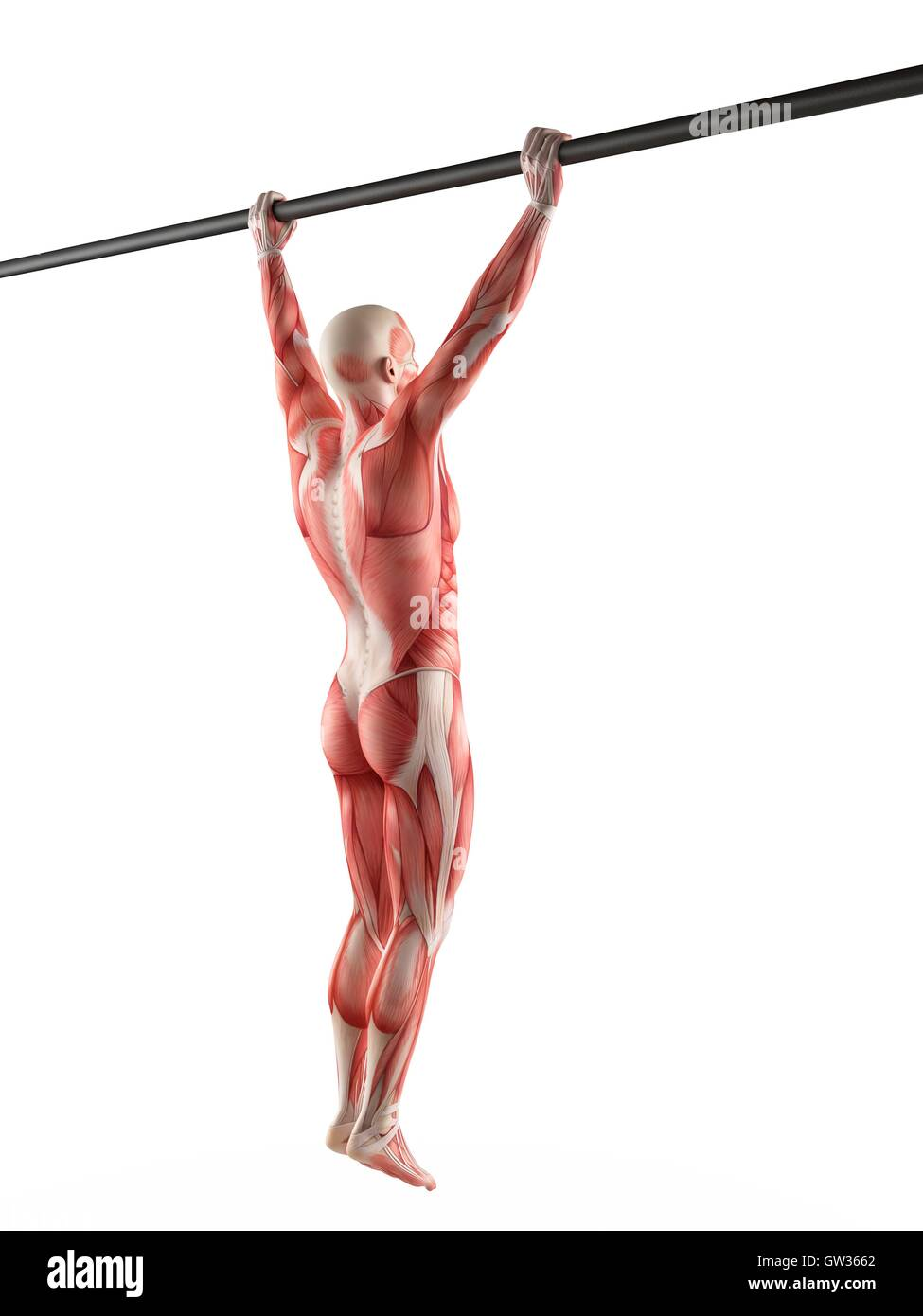 Pull Ups Exercise Cut Out Stock Images & Pictures - Alamy
