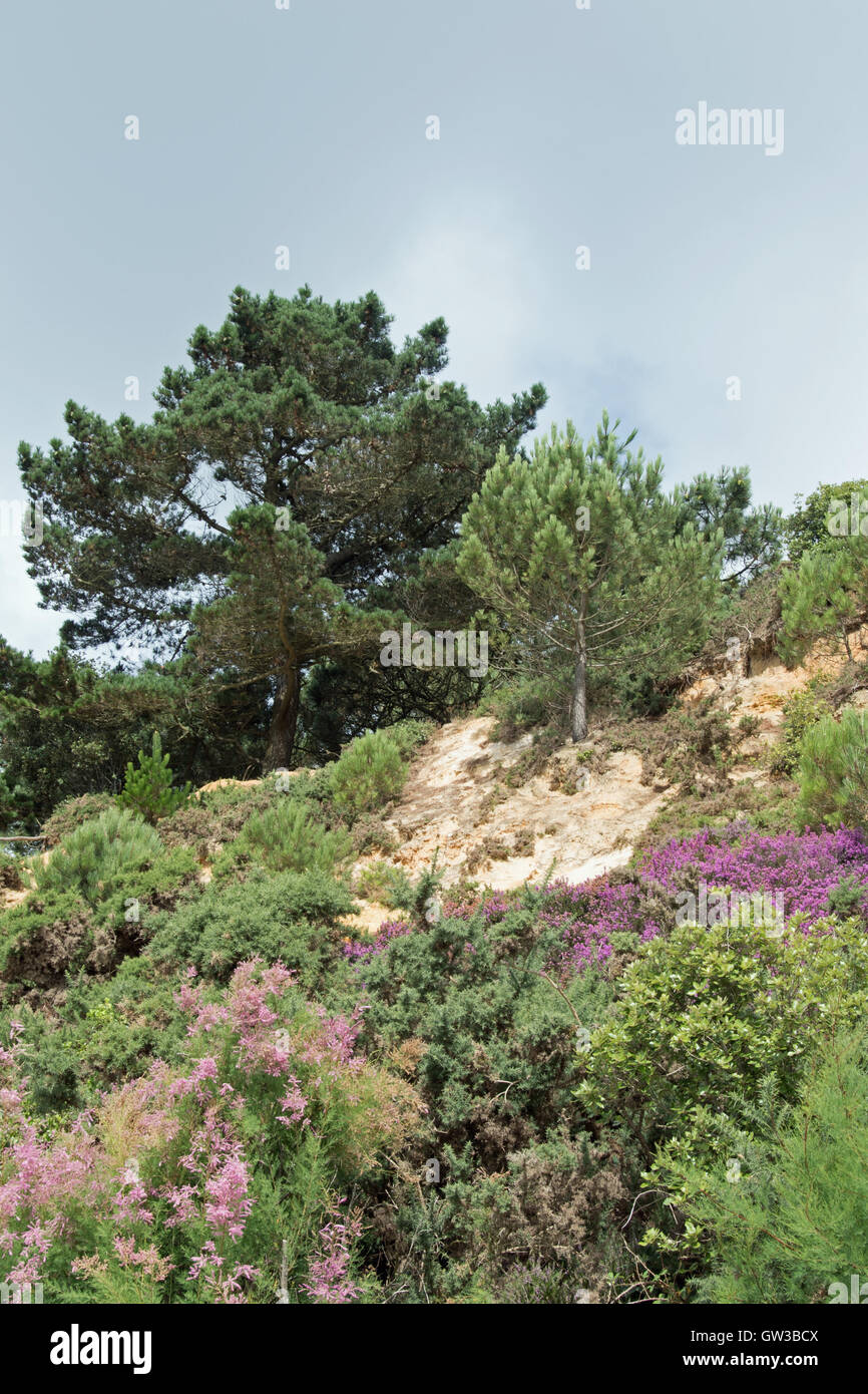 Canford Cliffs, Branksome Chine, overlooking Poole Bay, Dorset, UK Stock Photo