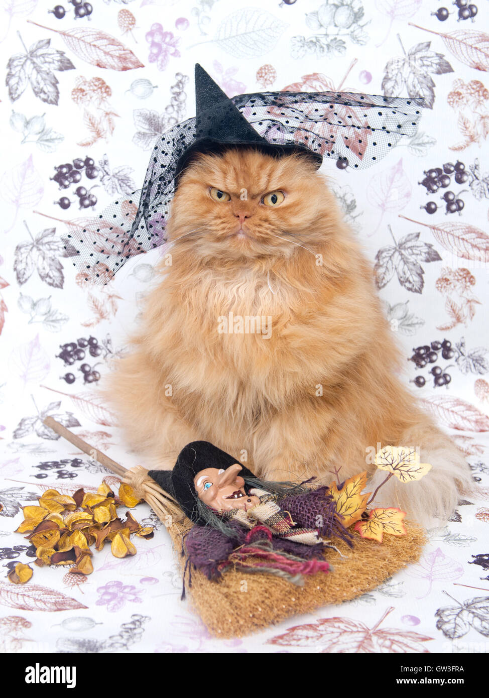 Persian cat wearing witch's hat - Stock Image