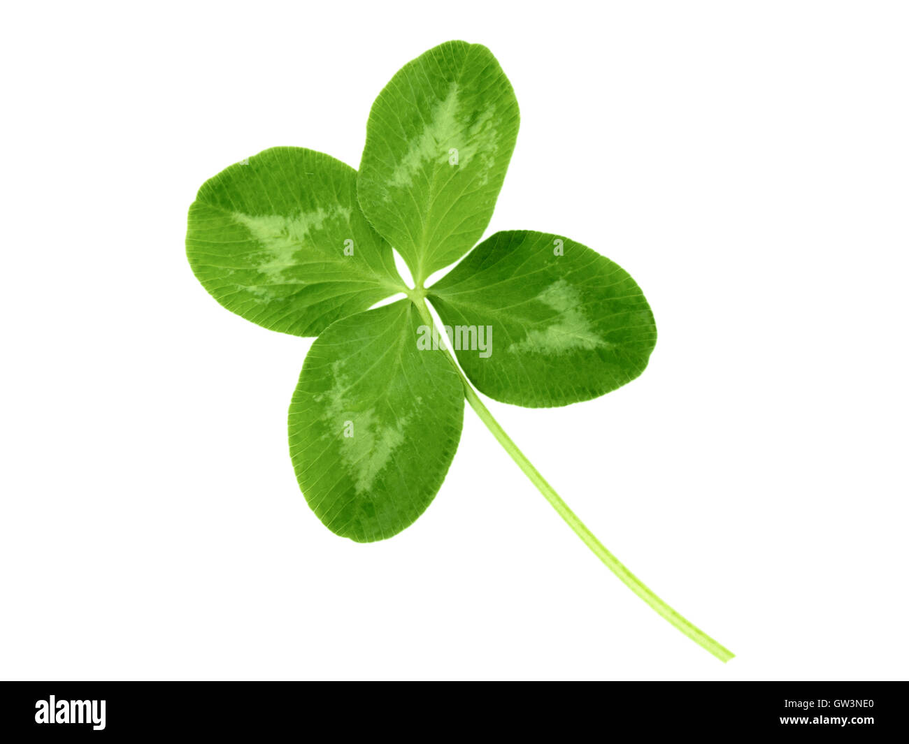 Lucky clover St Patrick Day irish holiday symbol isolated on white Stock Photo