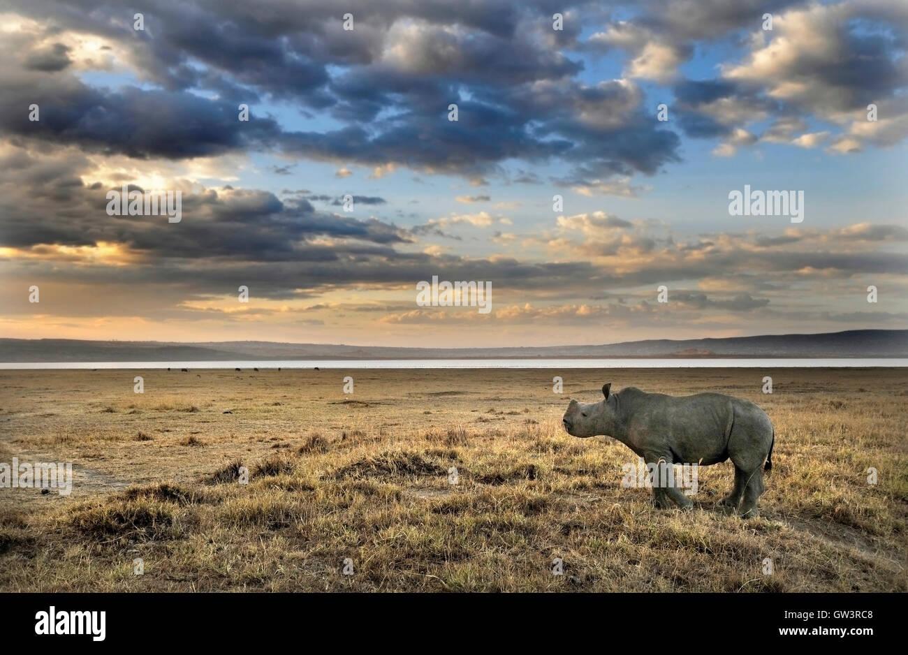 Baby Rhino, Lake Nakuru, Kenya - Stock Image