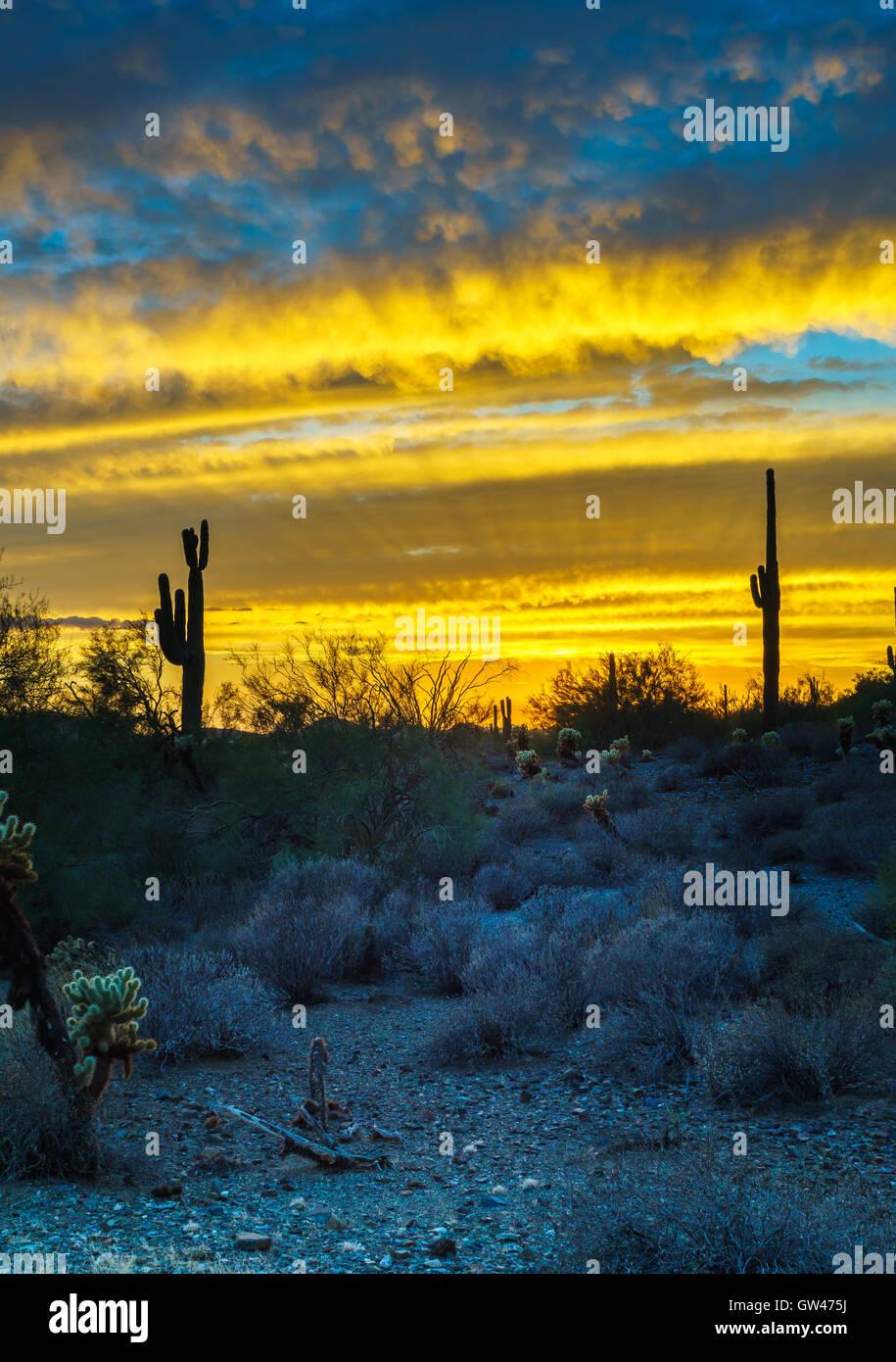 Phoenix arizona dating scene