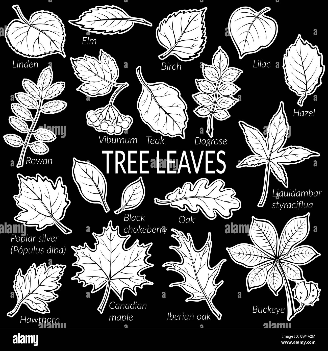 Leaves of Plants Pictogram Set - Stock Image