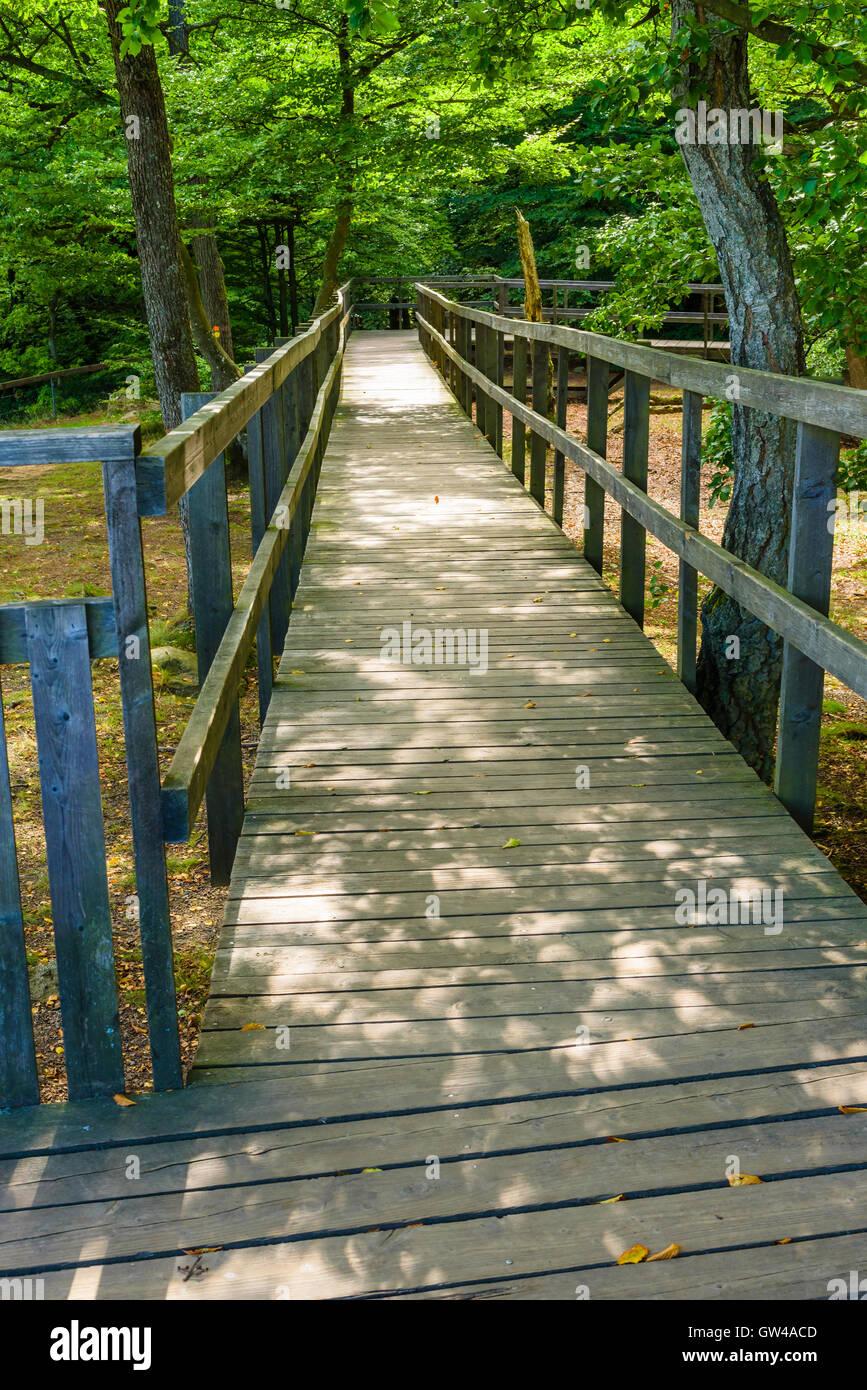 wooden wheelchair ramp or path in soderasen national park in sweden