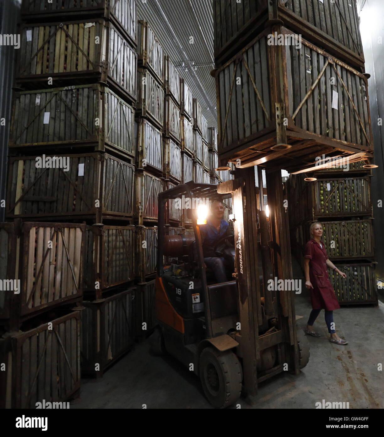 ROSTOV REGION, RUSSIA - SEPTEMBER 10, 2016: A fruit storage at the Krasny Sad farm company. Valery Matytsin/TASS - Stock Image
