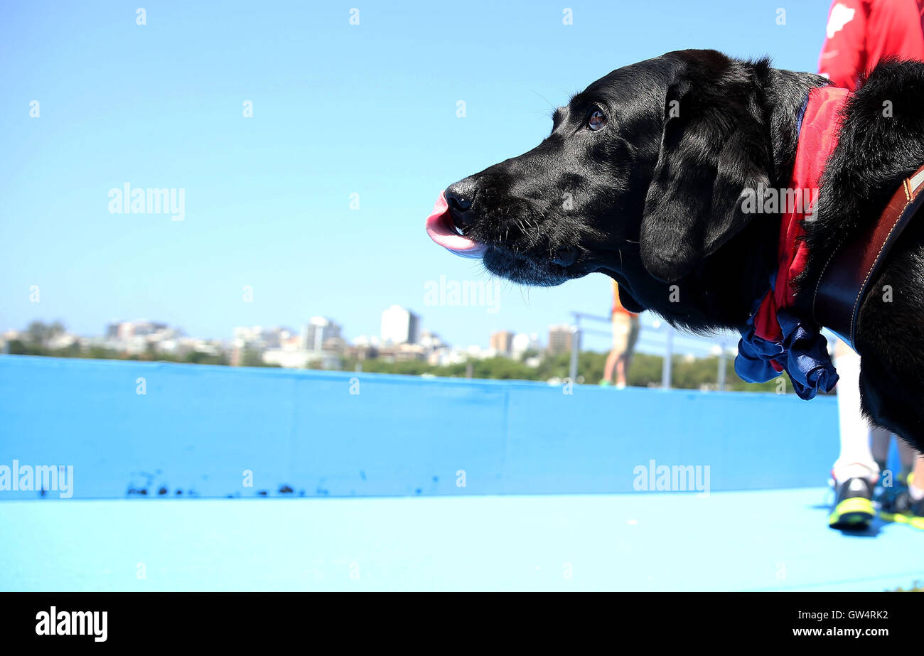 Rio De Janeiro, Brazil. 11th Sep, 2016. A guide dog looks on after the awarding ceremony of the LTA Mixed Coxed - Stock Image