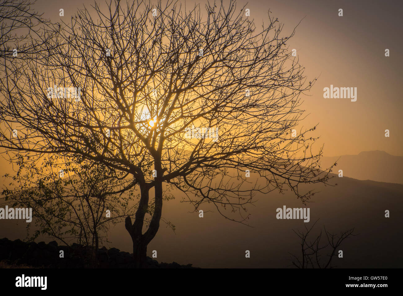 Sunrise over the Rift Valley as seen through an acacia tree in southern Ethiopia Stock Photo