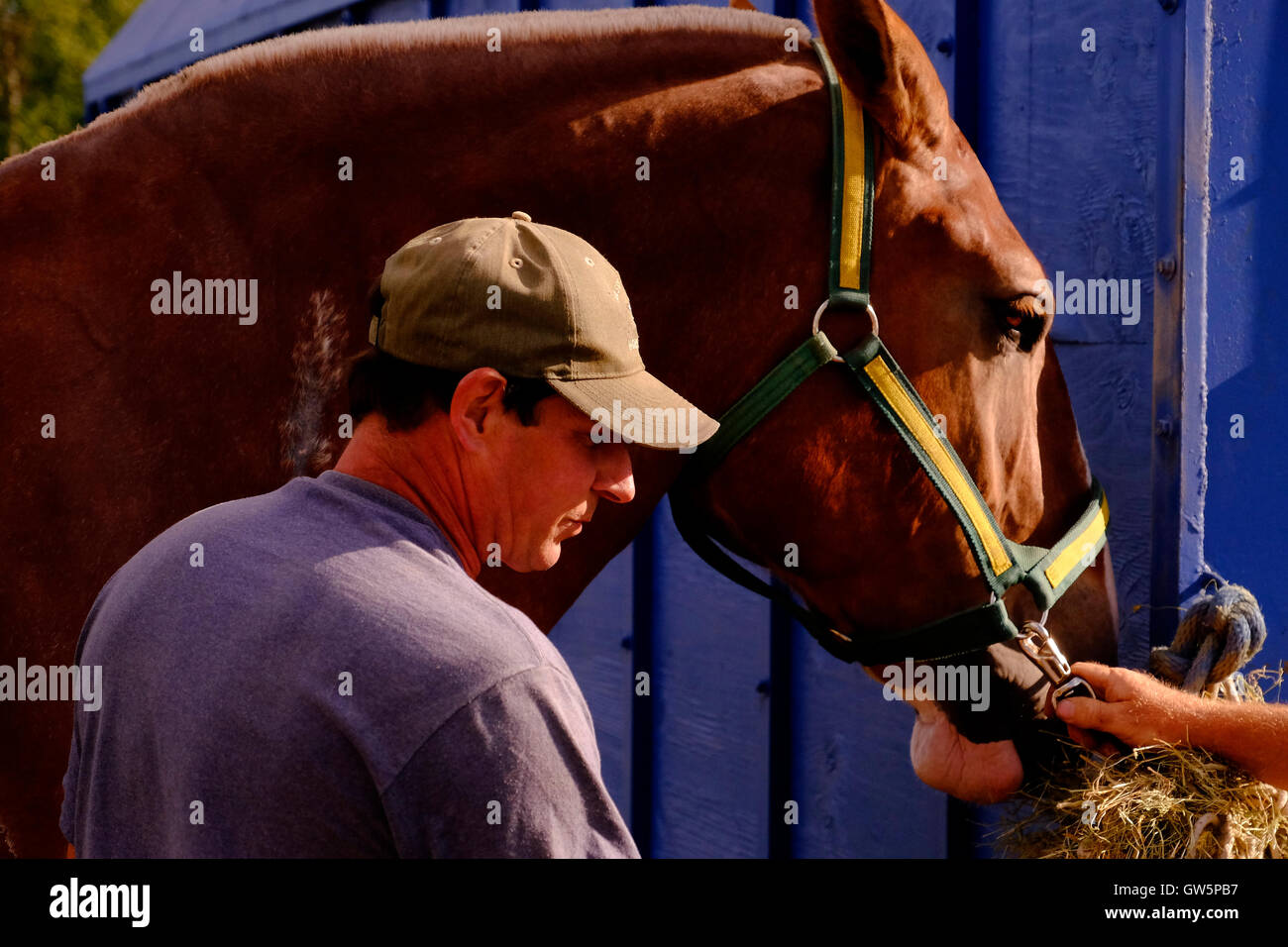 Farrier in cap with a beautiful horse prior to a competition at a county fair - Stock Image