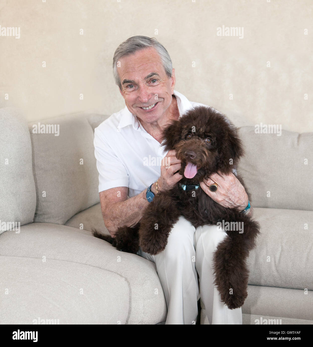 Clean cut slim and grey senior elderly man sits on a beige couch, with his pet companion labradoodle  puppy dog Stock Photo