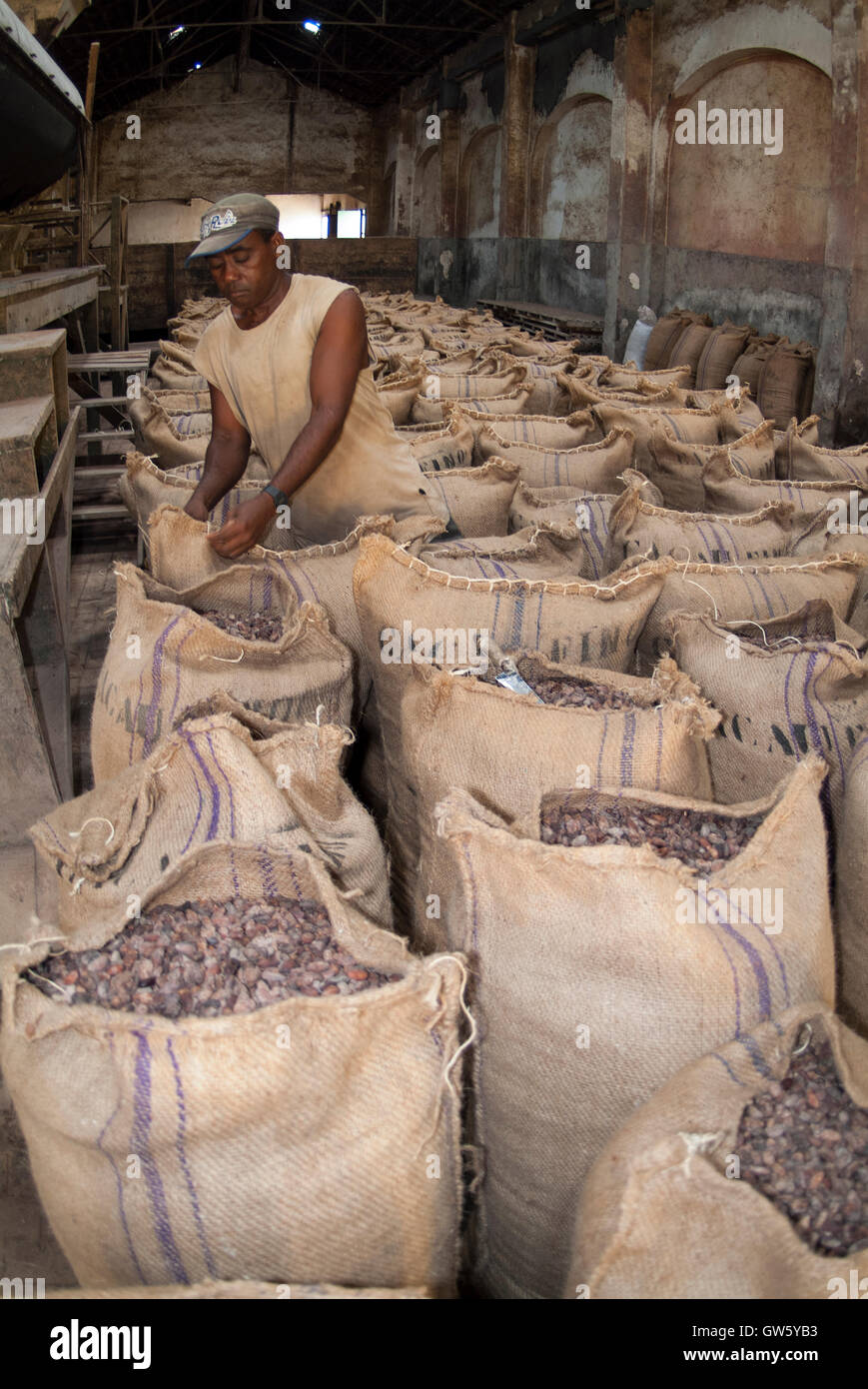 Cocoa beans packed in sacks after roasting, ready to be shipped. São Tomé e Príncipe Stock Photo