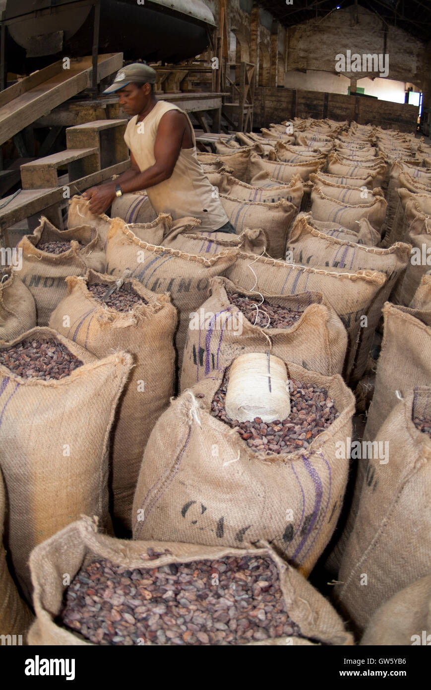 Cocoa beans packed in sacks after roasting, ready to be shipped. São Tomé e Príncipe - Stock Image