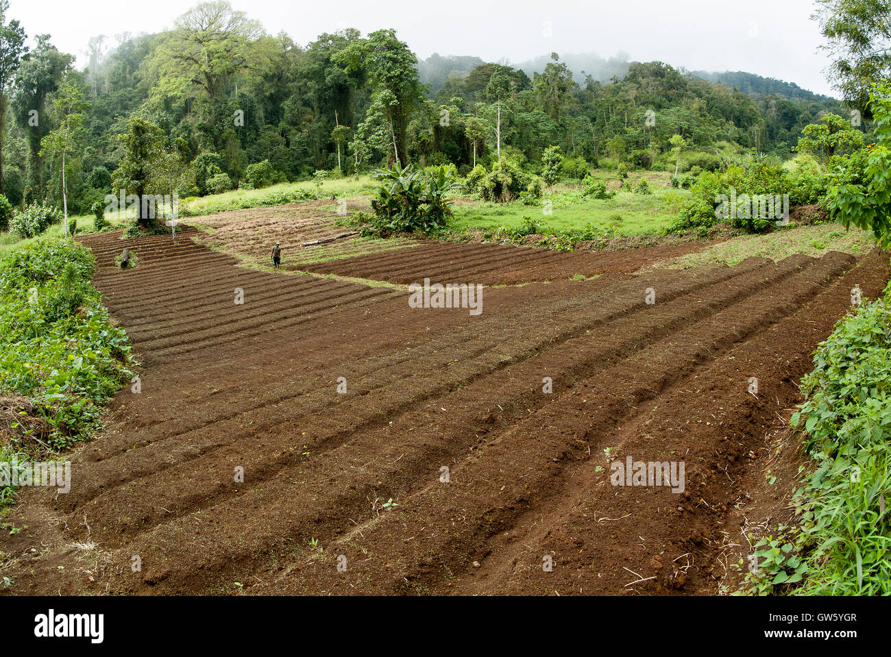 Rain Forest cut off to give room for horticultural explorations. São Tomé e Príncipe - Stock Image