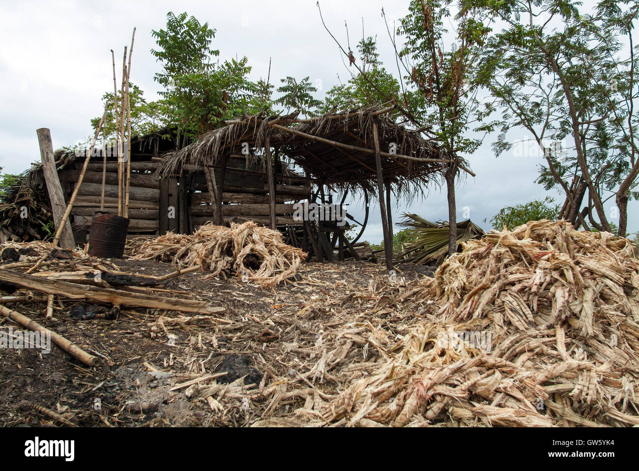 Sugar cane remains after being pressed to remove juice. São Tomé e Príncipe - Stock Image