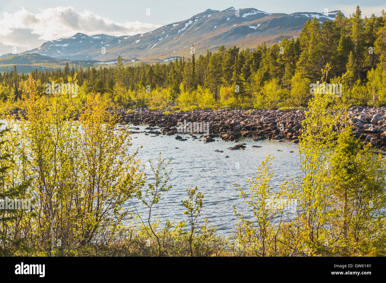 Spring time in Stora sjöfallets national park, little snow on the mountains, birch trees budding, little creek - Stock Image