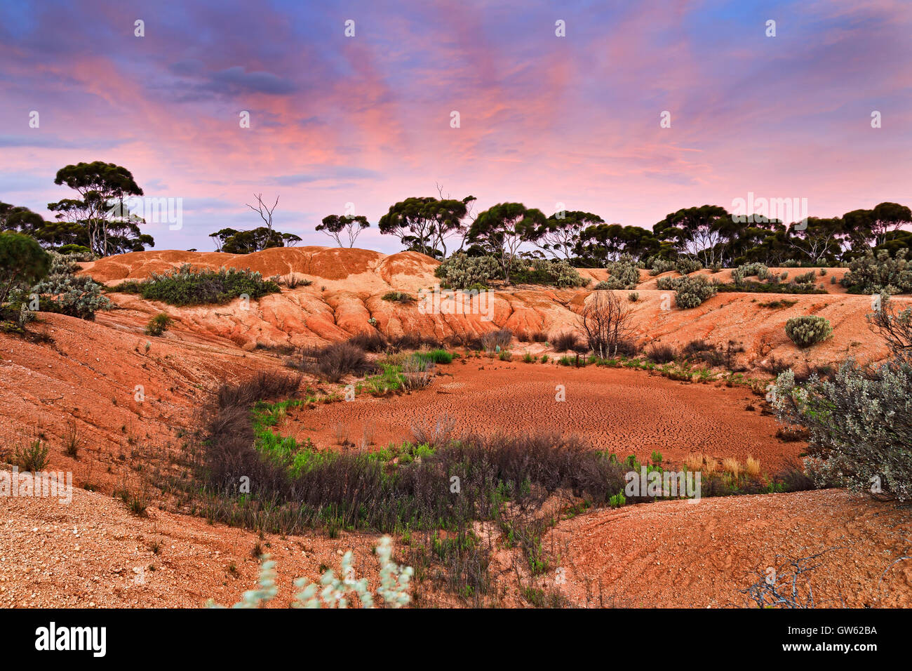 Dried water pit of billabong in remote western australian outback near Balladonia roadhouse. Red soil of remote - Stock Image