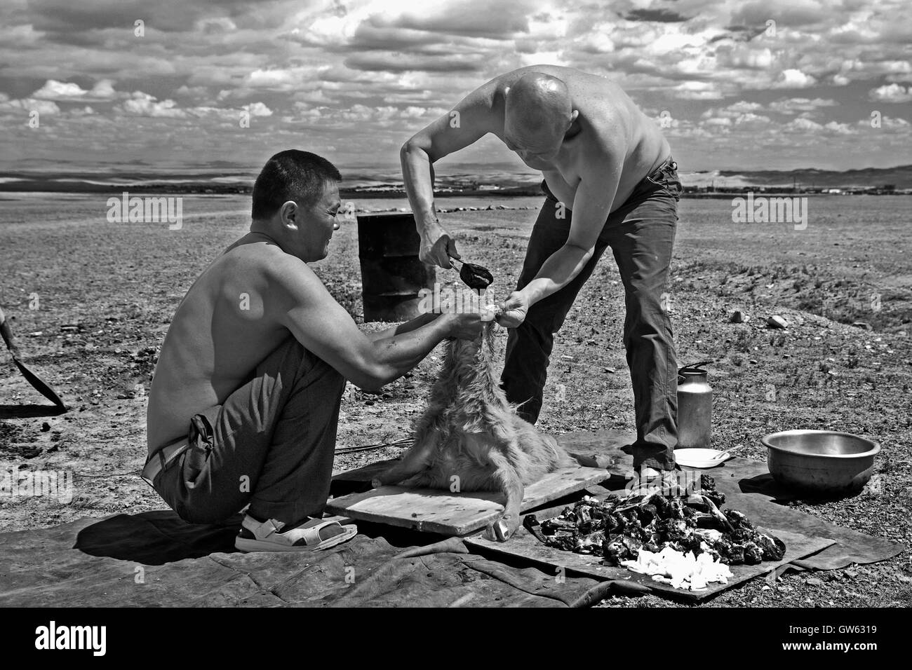 In an endless Altai plain cooking a goat in 'Bodog' style, inserting hot stones in the carcass of the animal. - Stock Image