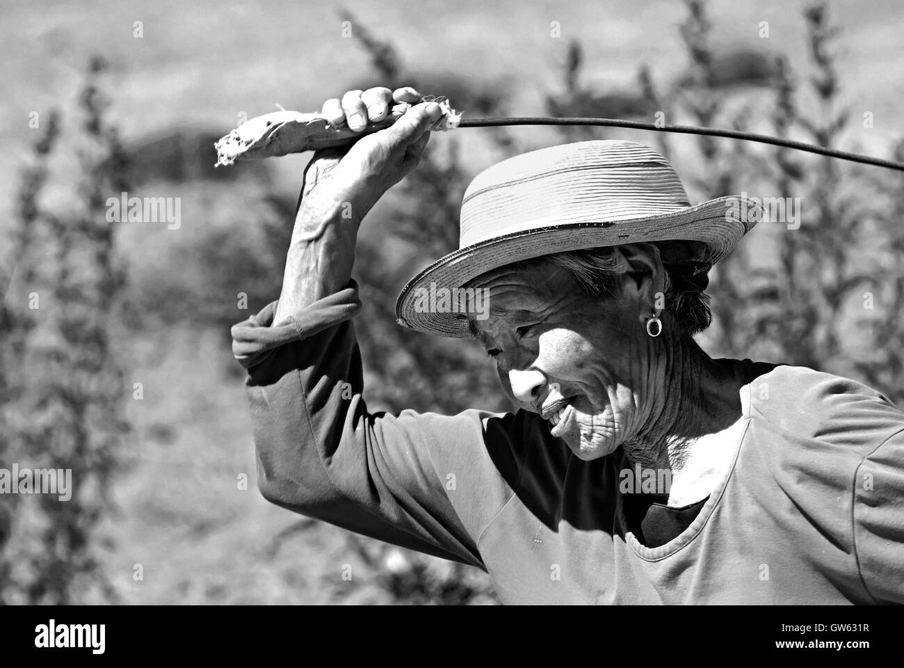 Old woman with a whip stick to beat the wool in the Gobi Desert, Mongolia - Stock Image