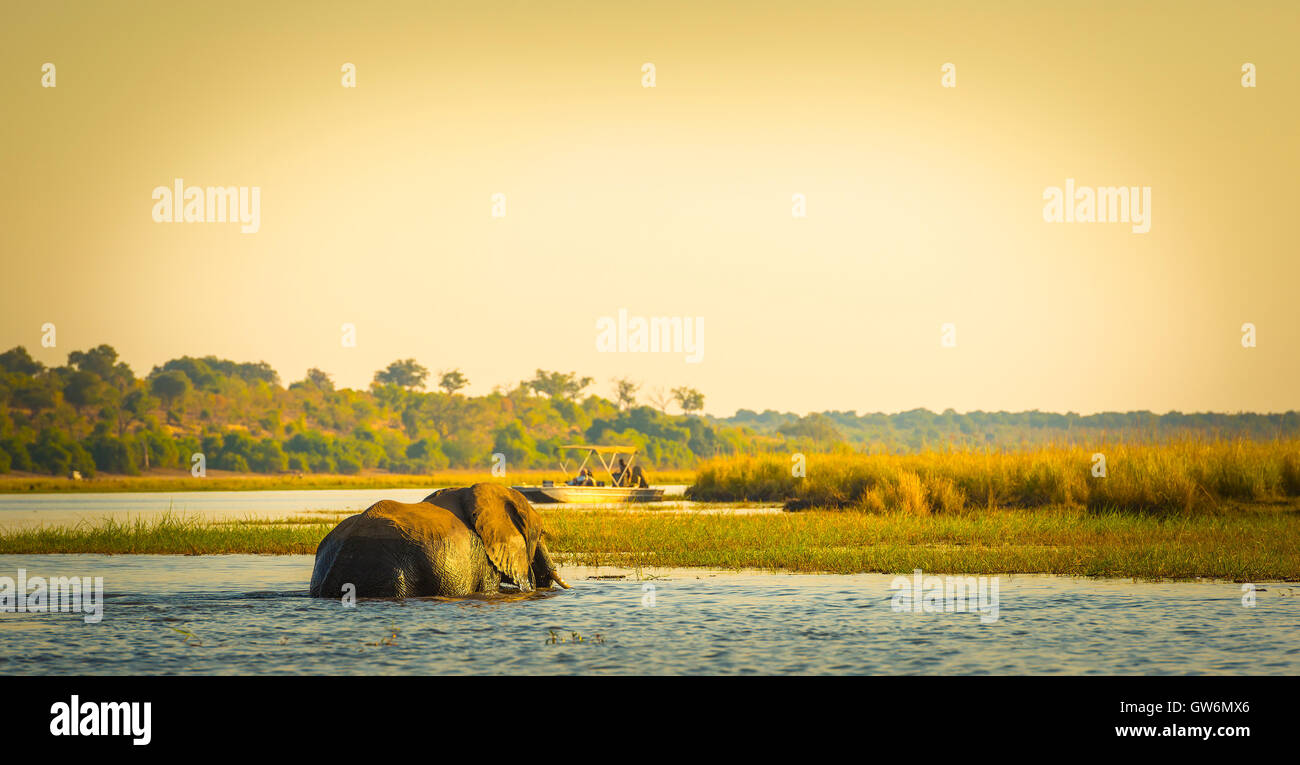 Tourists watching an elephant while on safari in Botswana, Africa - Stock Image