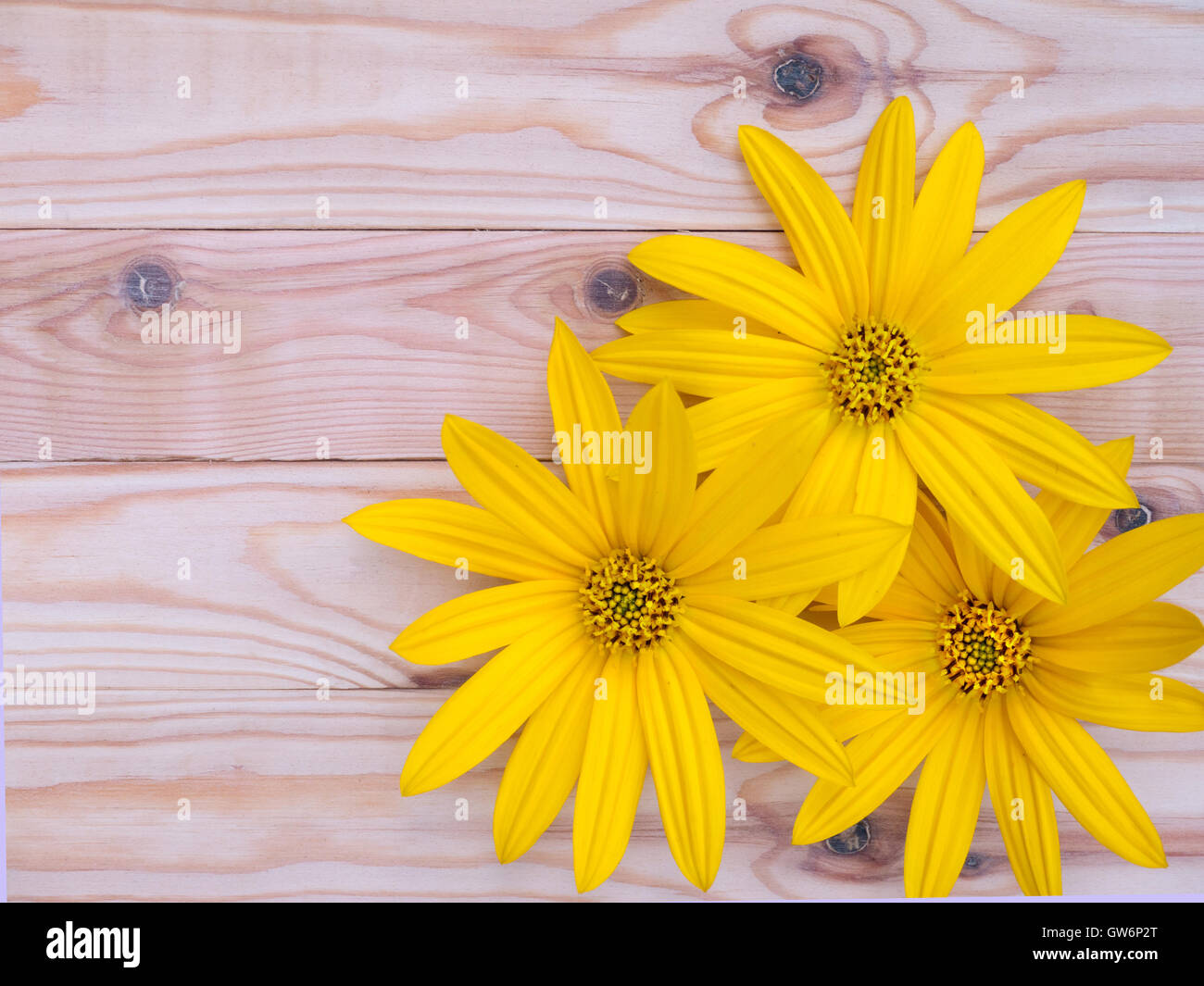 Three yellow topinambur flowers on the knotted wooden planks background - Stock Image