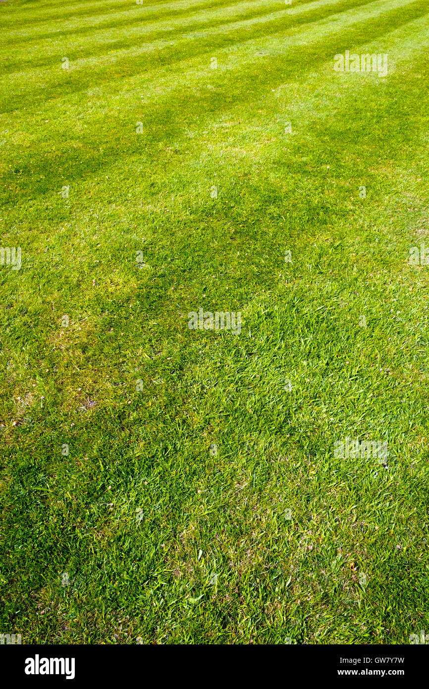 Mower stripes in a grass lawn. Full frame background texture. - Stock Image