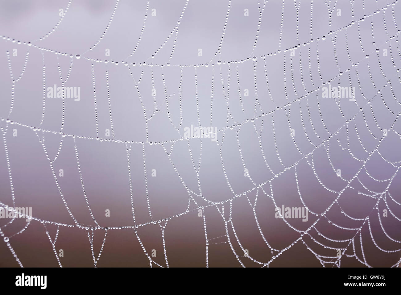 Vintage toned cobweb with dewdrops close up, shallow depth of field, natural background. - Stock Image