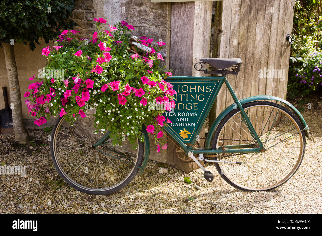 Pink petunias and bacopa in flower decorate an old bicycle outside a village tearooms in UK - Stock Image