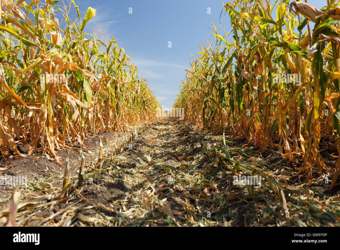 Maize Tunnel Stock Photos & Maize Tunnel Stock Images - Alamy