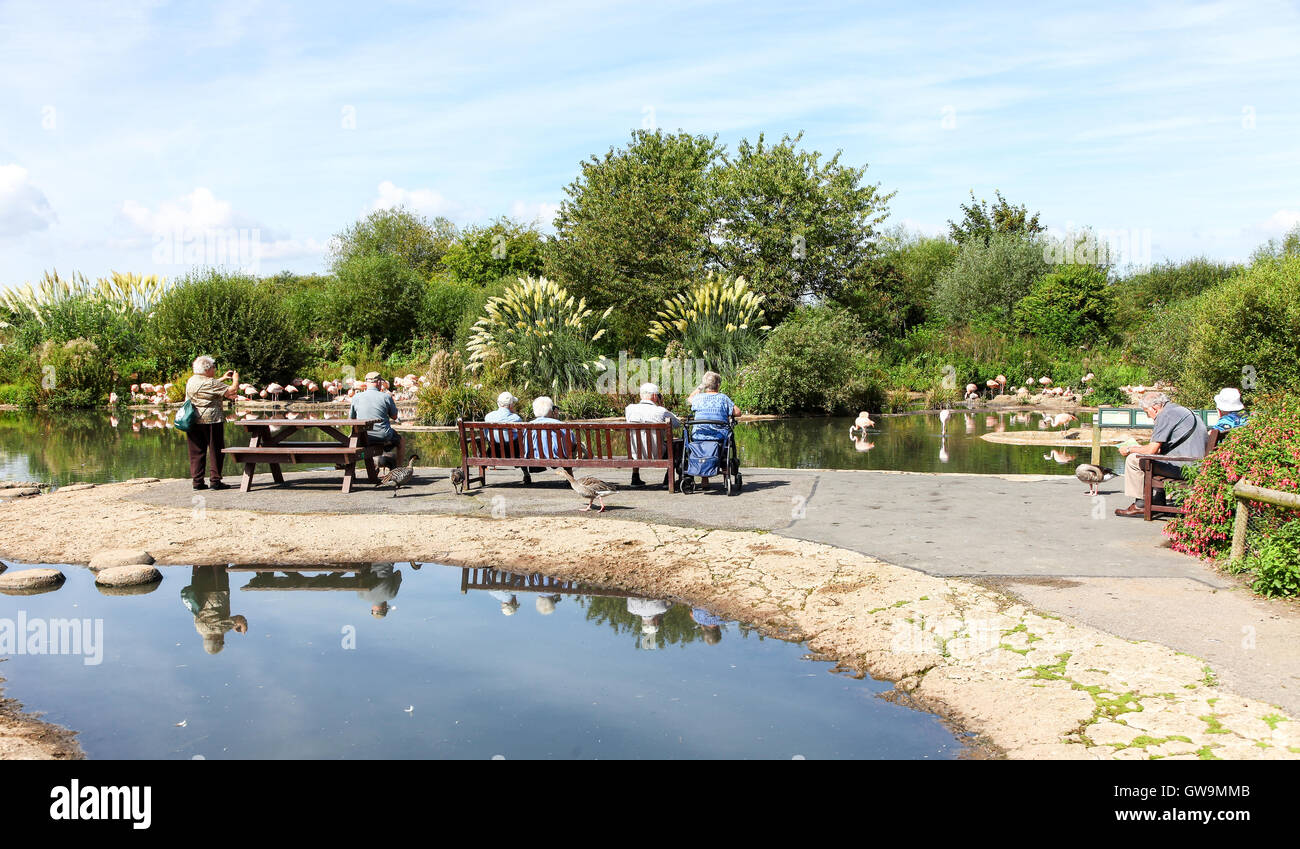 People sitting and feeding the birds at the Wildfowl and Wetlands Trust Slimbridge Wetland Centre - Stock Image