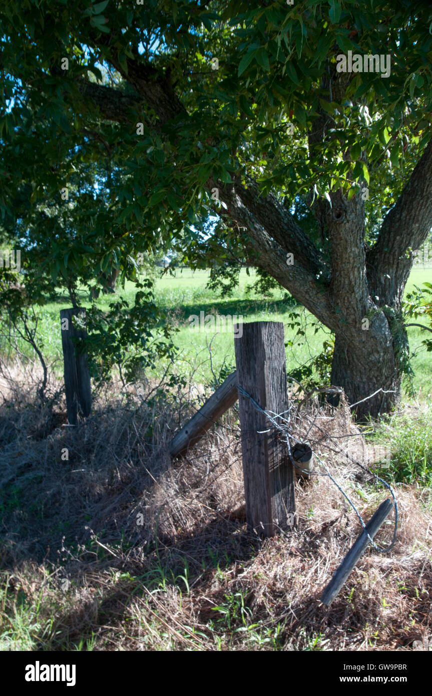 Fence post and tree in north Texas. - Stock Image