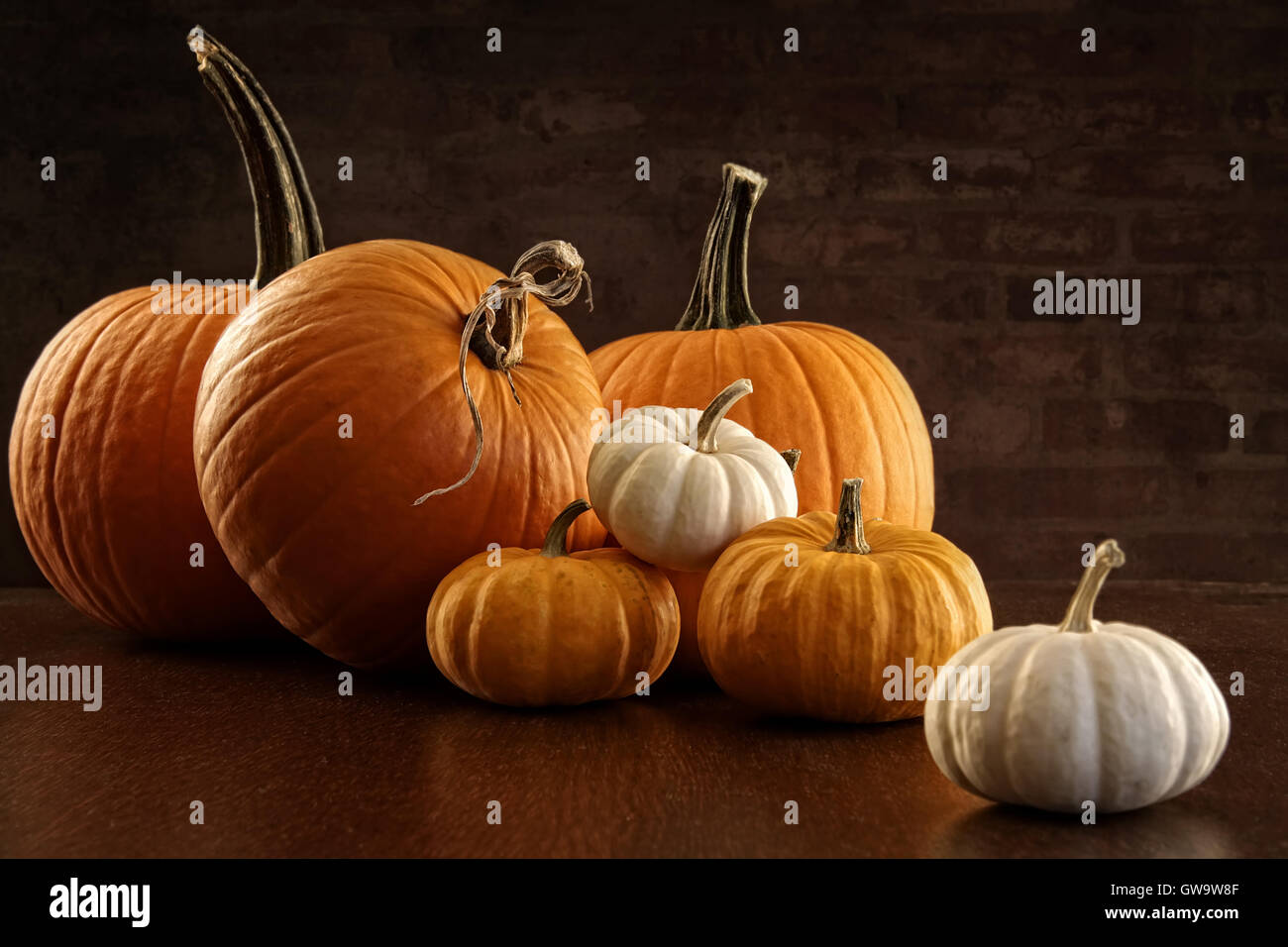 Pumpkins and gourds on table Stock Photo