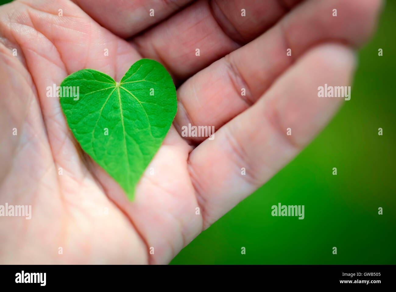 Heart-shaped sheet on a hand, Herzfoermiges Blatt auf einer Hand - Stock Image