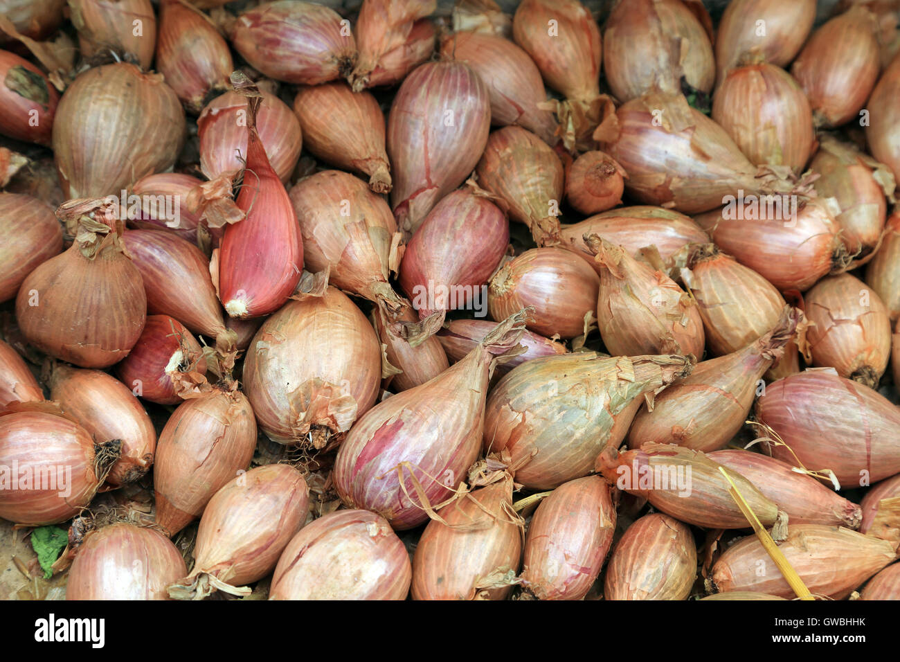 Shallots on stall in market at Place d'Eglise, Larmor-Baden, Morbihan, Brittany, France - Stock Image