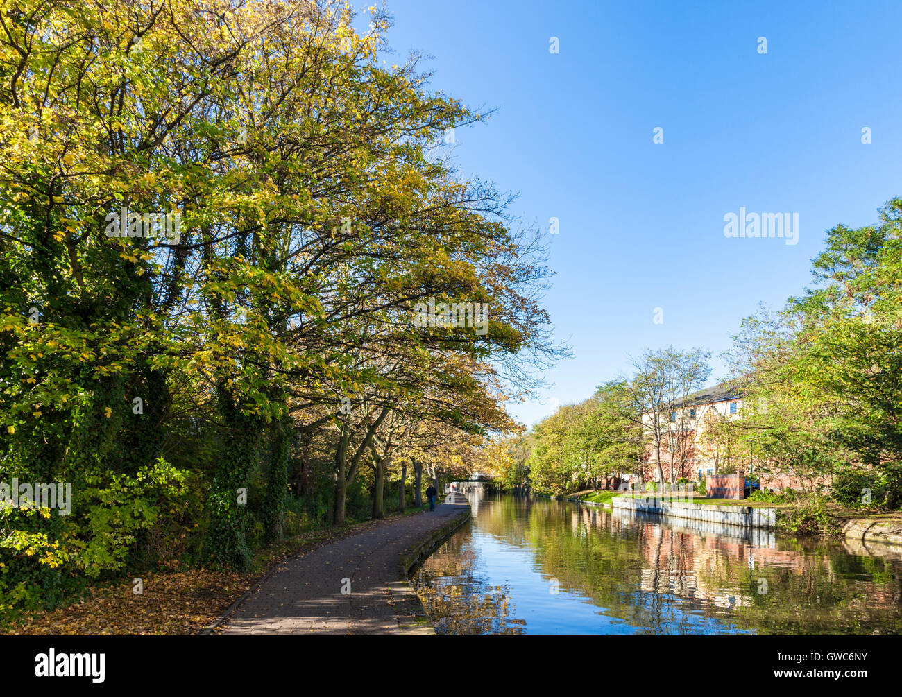 Trees in Autumn on the Nottingham and Beeston canal in Nottingham, England, UK - Stock Image