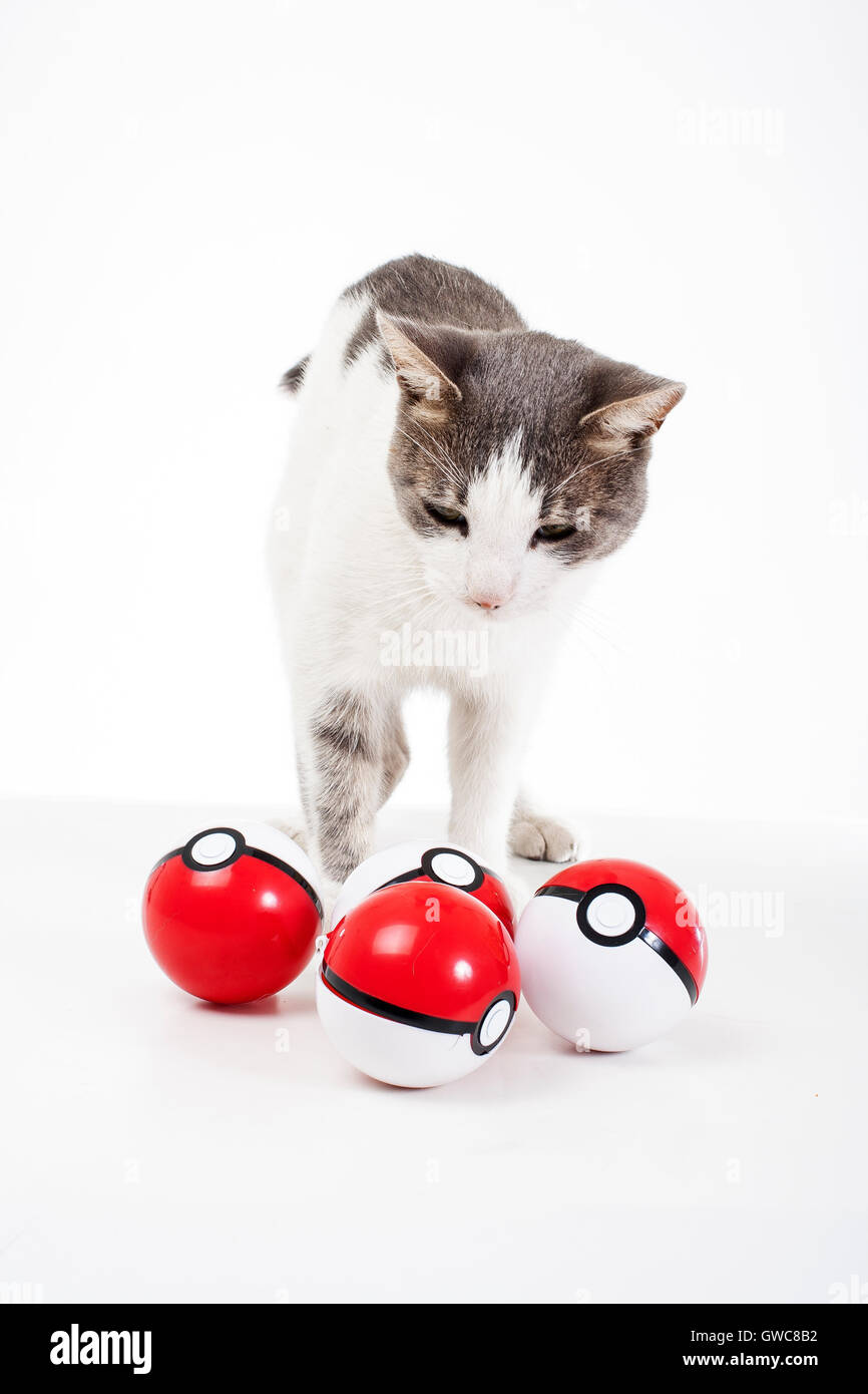 Trained pets studio white background photography Cat with real pokeballs play fun cute - Stock Image